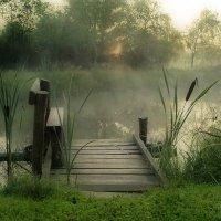 Утро туманное ..... :: Елена Kазак