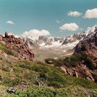 Арчёвый лес на высоте 4050м. :: Виктор Осипчук