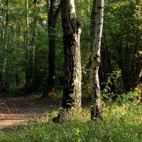 Вечерний лес :: Константин Фролов