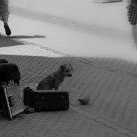 Житель улицы :: Валерий Волков