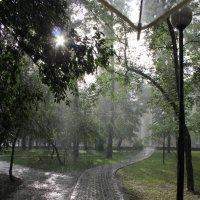 Ливень и солнце :: Наталья Золотых-Сибирская
