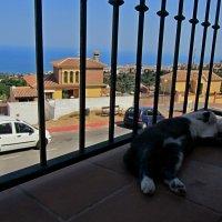 московская кошка в Испании :: Natali торрггшотогр