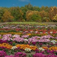 В ботаническом саду :: Сергей Матях