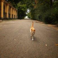котэ, гуляет само по себе... :: Алексей Салло