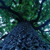 дерево :: Дарина Серикова