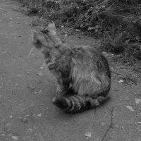 кошка :: Дарина Серикова