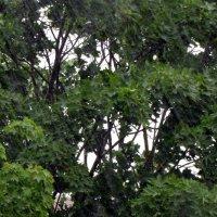 Дождь :: Даша Полевая