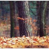 Tree :: Андрій Кізима