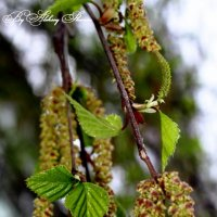 Весна :: Алексей Шунин