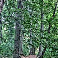 Тропинка в парке :: Игорь Мукалов