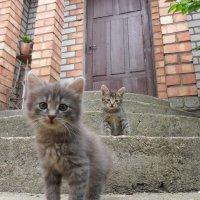 Котята :: ян серга