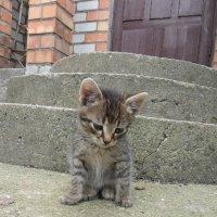 Котёнок :: ян серга