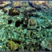 подводный мир :: Sergey Bagach
