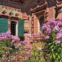 Цветы августа :: Николай Белавин