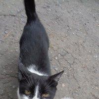 И кошки, и одуванчики состоят из единого космического вещества... :: Алекс Аро Аро
