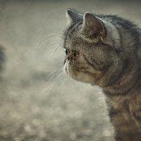 ..А голуби во дворе его не боялись.., они просто разлетались... за слИшком доброе лицо..) :: Лилия .