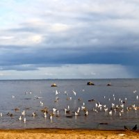 Собирается дождь над заливом :: Елена
