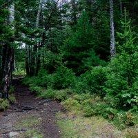 Тропинка в лесу :: Валентин Когун