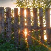 лучики уходящего солнца :: леонид логинов