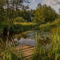 Мосток  над тихою речушкой :: Андрей Дворников