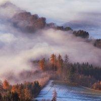 Туман мохнатый :: Elena Wymann