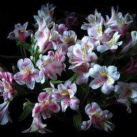 роскошь лета-цветы :: Олег Лукьянов