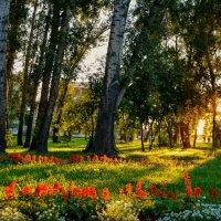 Солнечный вечер :: юрий Амосов