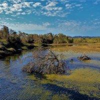 Солёная река в заповеднике Вади Эль Джимал... :: Sergey Gordoff