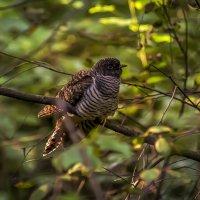 Птица :: Алексей Строганов