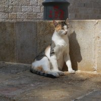 ..когда тень от кошки похожа на льва... :: Александра