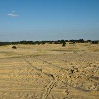 Бугристые пески или Харьковская пустыня :: Роман Кривеженко
