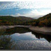 Лесные отражения :: Ольга Голубева