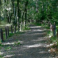 в Подмосковном лесу :: elena manas