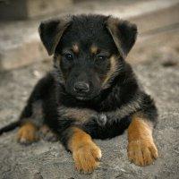 Вот и началась собачья жизнь.... :: владимир