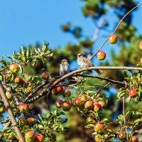 Этюд с райскими яблочками и птицами :: Юрий Яловенко