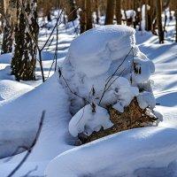 Снежный лев :: Сергей Филатов