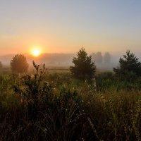 Под первыми лучами солнца :: Сергей