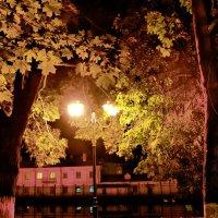 Ночь,улица,фонарь... :: Елена Строганова