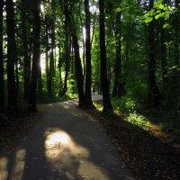 Догуливаем лето (я доезжаю на велосипеде) :: Андрей Лукьянов