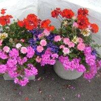 Очередные городские цветы :: Марина Домосилецкая