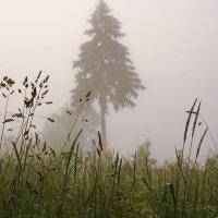 Приглашаю Вас прогуляться в даль туманную :: Владимир Гилясев