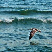 The Box - пляж эмоций. Такие вот павлины над морем там летали... :: Александр Резуненко