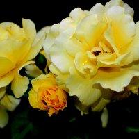 Садовый цвет... :: Анна Шишалова