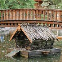 утиный дом на воде ) :: Ким Михайлов
