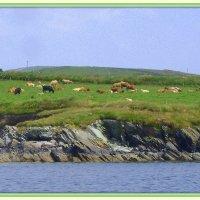 Лаконичные берега Ирландии - 4 :: Марина Домосилецкая