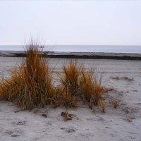 Балтийский берег Осень :: Анна Воробьева