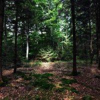 Сказка леса ... :: Владимир Икомацких