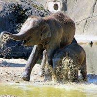 Слоновьи шалости 1 :: Alexander Andronik