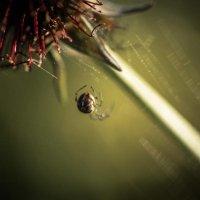 Где-то в дебрях плетет паутинку .... :: Anna Klaos