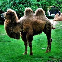 Германия, зоопарк! :: Натали Пам